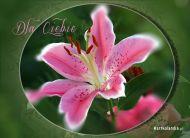 eKartki Kwiaty Dla Ciebie kwiat,