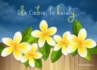 eKartki Kwiaty Dla Ciebie, te kwiaty,