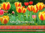 eKartki Kwiaty Dla Teściowej,