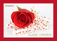 eKartki Kwiaty Kwiat mi³o¶ci,