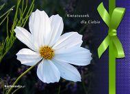 eKartki Kwiaty Kwiatuszek dla Ciebie,