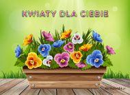 eKartki Kwiaty Kwiaty dla Ciebie,