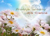 eKartki Kwiaty Promyk wiosny,