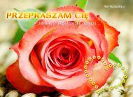 eKartki Kwiaty Przepraszam Ciê,