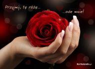 eKartki Kwiaty Przyjmij, tę różę,