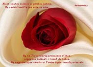 eKartki Kwiaty Ró¿a z ¿yczeniami,