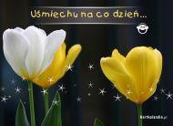 eKartki Kwiaty Uśmiechu na codzień,