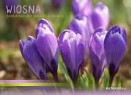 eKartki Kwiaty Wiosna,