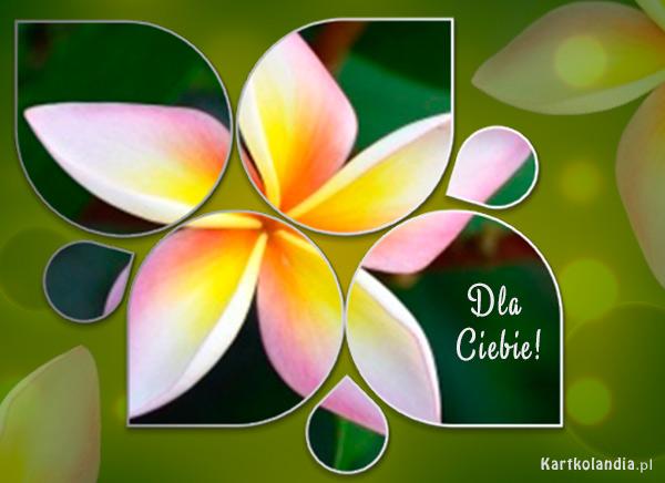 Cudowny kwiat