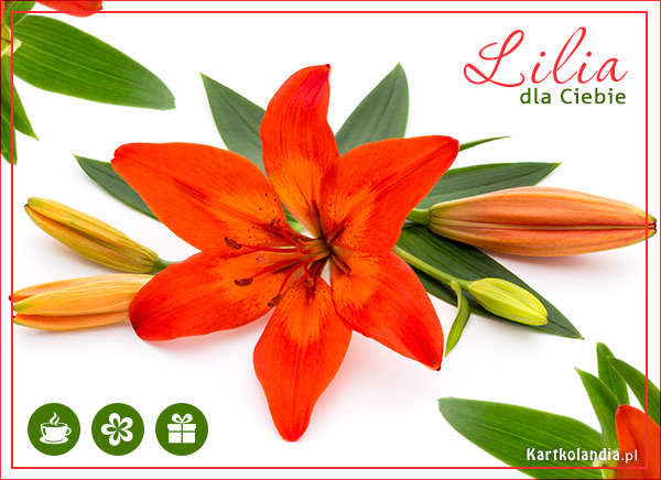 Lilia dla Ciebie