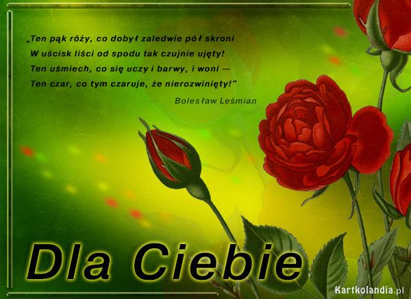 Pąk czerwonej róży