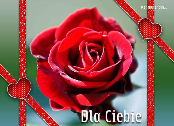 Róży kwiat
