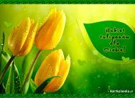 eKartki Kwiaty Bukiet tulipanów dla Ciebie,