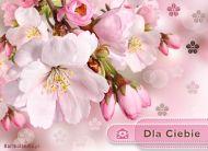 eKartki elektroniczne z tagiem: Darmowe e-kartki kwiaty Delikatne jak Ty!,