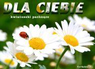 eKartki Kwiaty Kwiatuszki pachn±ce,