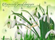 eKartki Kwiaty Kwieciste pozdrowienia,