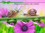 eKartki elektroniczne z tagiem: Darmowe e-kartki kwiaty Magiczne kwiaty dla Ciebie,