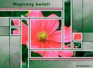 eKartki Kwiaty Magiczny kwiat,