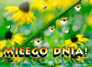 eKartki Kwiaty Miłego Dnia!,