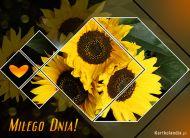 eKartki Kwiaty Mi³ego Dnia!,