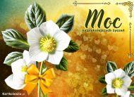 eKartki elektroniczne z tagiem: Darmowe e-kartki kwiaty Moc najpiękniejszych życzeń,