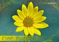 eKartki Kwiaty Moc ¿yczeñ,