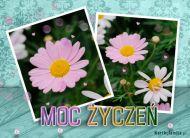 eKartki Kwiaty Moc ¯yczeñ,