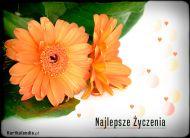 eKartki Kwiaty Najlepsze ¿yczenia,