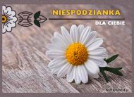 eKartki elektroniczne z tagiem: Kartki kwiaty online Niespodzianka,
