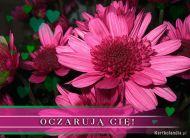 eKartki Kwiaty Oczaruj± Ciê,
