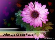 eKartki Kwiaty Ofiaruję Ci ten kwiat,