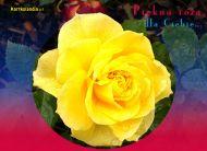 eKartki Kwiaty Piękna róża,