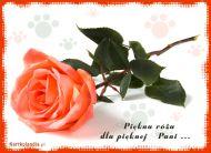 eKartki Kwiaty Piêkna ró¿a dla piêknej Pani,