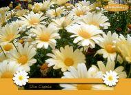 eKartki Kwiaty Polne kwiaty,