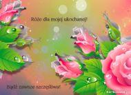 eKartki Kwiaty Ró¿e dla ukochanej,