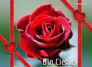 eKartki Kwiaty Róży kwiat,