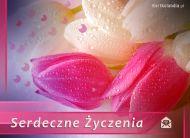 eKartki Kwiaty Serdeczne ¯yczenia,