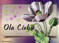 eKartki elektroniczne z tagiem: Darmowe e-kartki kwiaty Wymarzony kwiat,