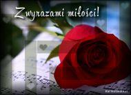 eKartki Kwiaty Z wyrazami mi³o¶ci,