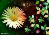 eKartki Kwiaty ¯yczê Ci ...,