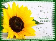 eKartki elektroniczne z tagiem: Darmowe e-kartki kwiaty Życzenia dla Ciebie,