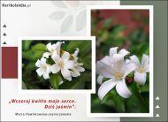 eKartki Kwiaty Jaśmin,