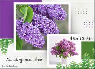 eKartki Kwiaty Kartka pełna bzu,
