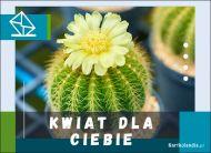 eKartki Kwiaty Kwitnący kaktus,