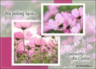 eKartki Kwiaty Na polnej łące...,