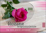 eKartki elektroniczne z tagiem: Róża Różane wspomnienie,