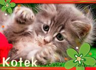 eKartki elektroniczne z tagiem: e-Kartki Narodziny Dziecka Kotek dla Ciebie,